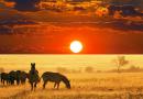 Where to go on an African Safari