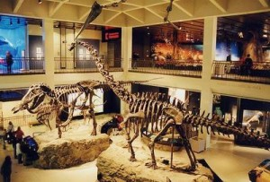 texas_houston_museum_dinosaur