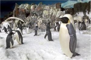 SeaWorld-PenguinEncounter